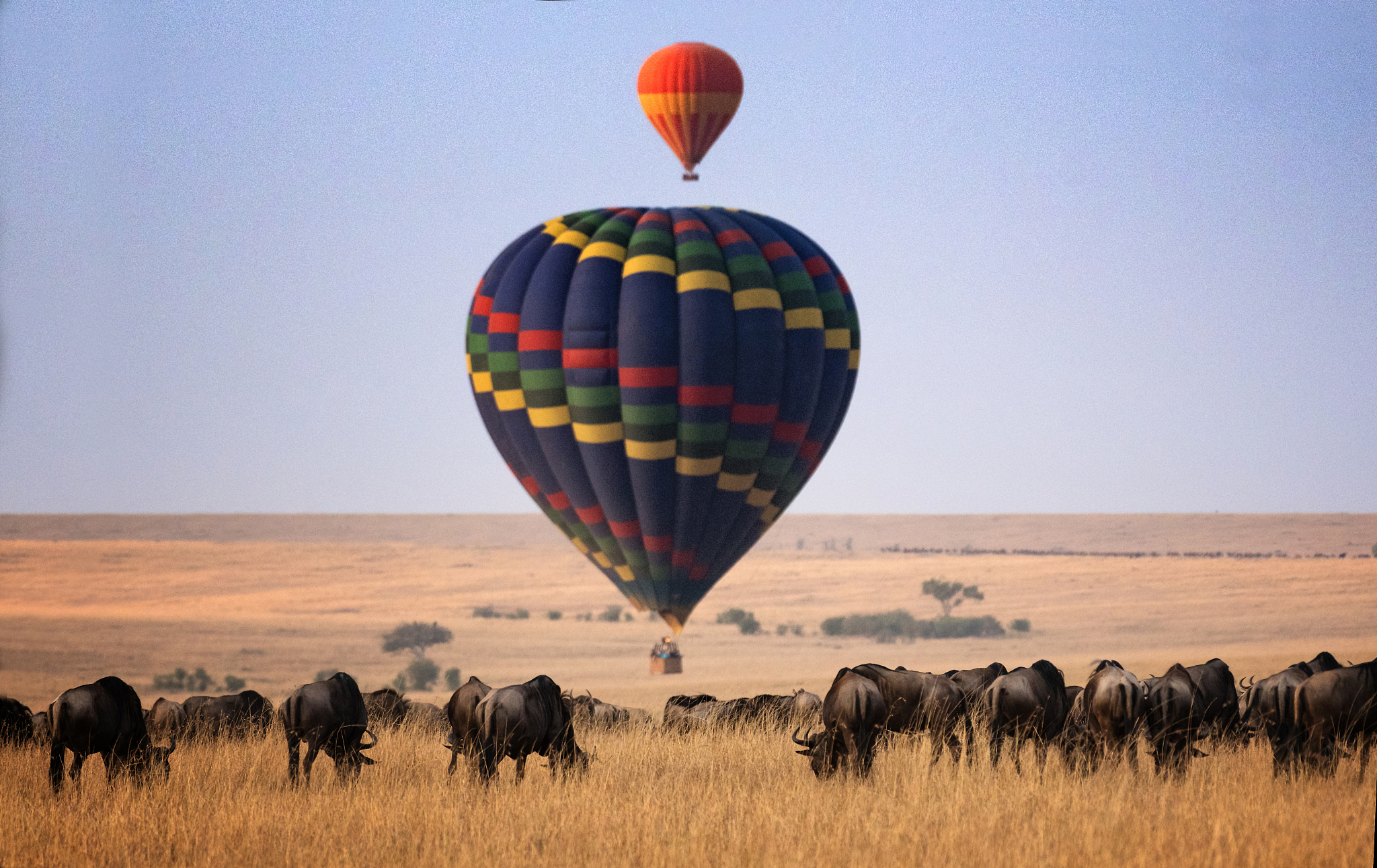Serengeti & Mara