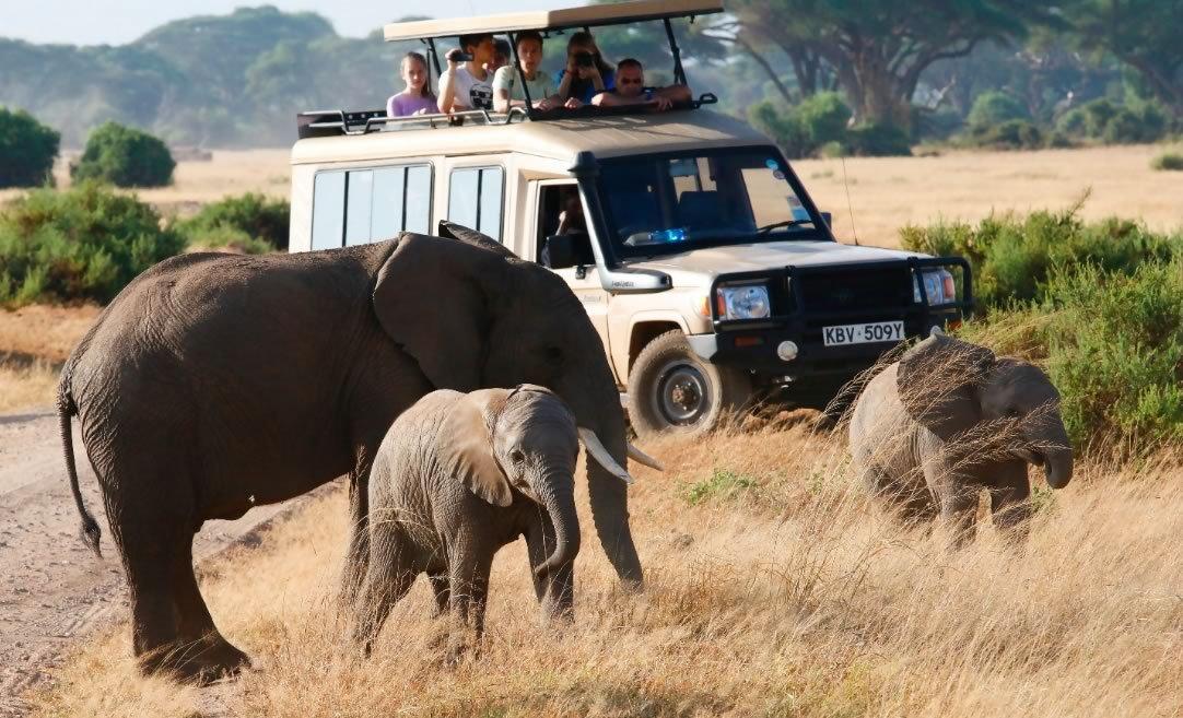 Dream Africa Tours Evening Safaris