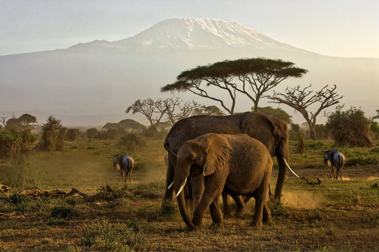 Dream Africa Tours - Amboseli _ Air viewing