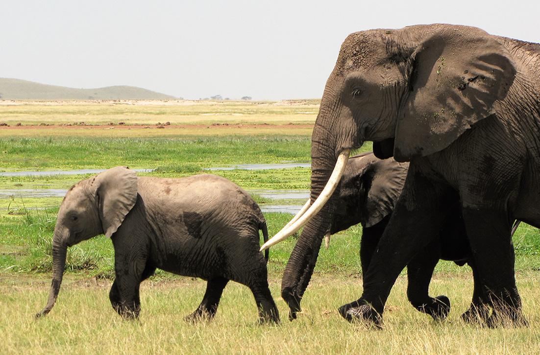 Dream Africa Tours - Amboseli _ Elephant Family