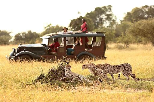 Dream Africa Tours - Amboseli _ Leopard