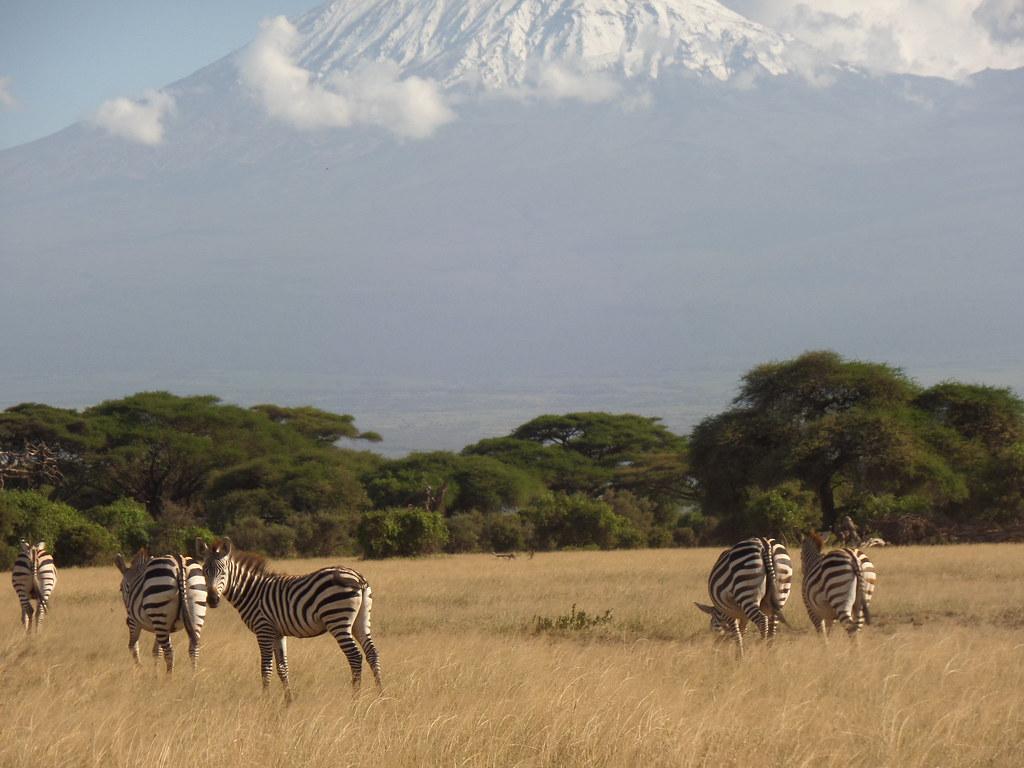 Dream Africa Tours - Amboseli _ Mt & Zebras