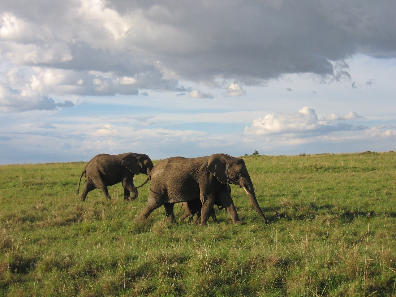 Dream Africa Tours - Amboseli _ On the Move