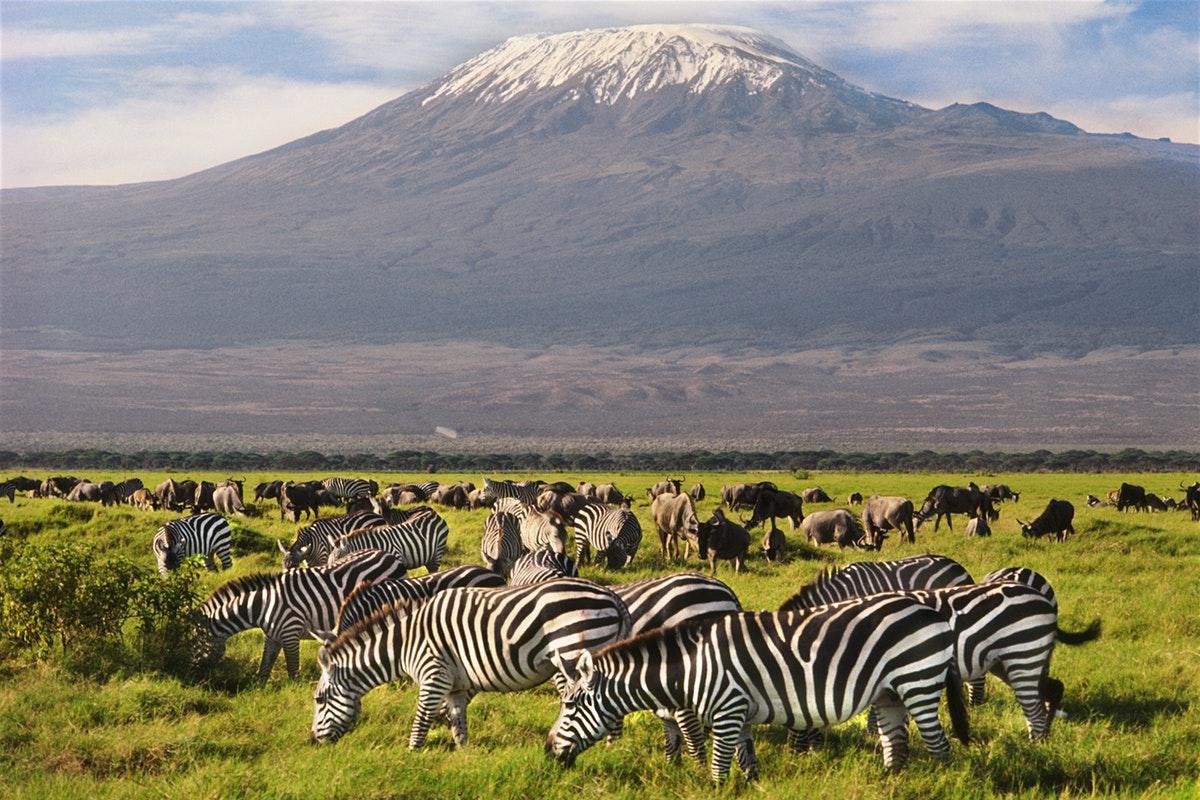 Dream Africa Tours - Amboseli _ Zebra