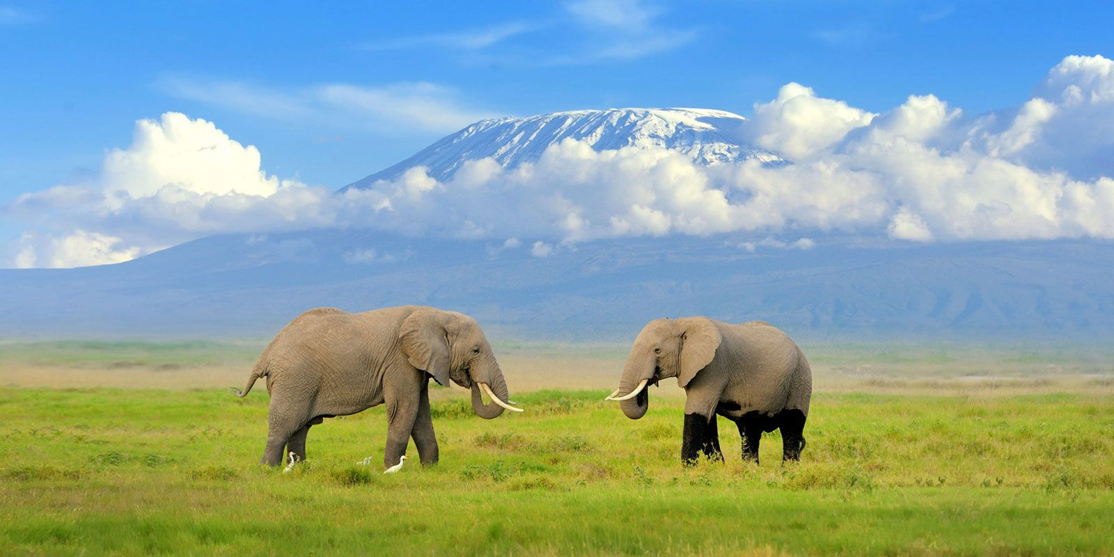Dream Africa Tours - Amboseli